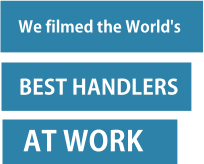 Text: We filmed the world's best handlers at work