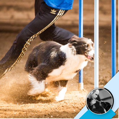 Hunde-Agility: Slalom. Ein DogCoaches Kurs mit Philipp Müller-Schnick für das Slalom-Hindernis im Agility-Parcours.