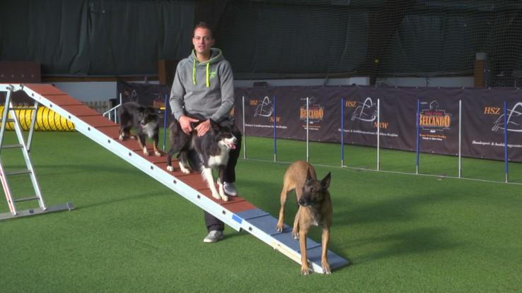 Tobias Wüst: Abgang vom Steg mit mehreren Hunden.