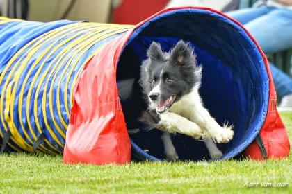 Hund rennt aus Tunnel