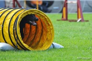 Hund mit Tunnelunfall